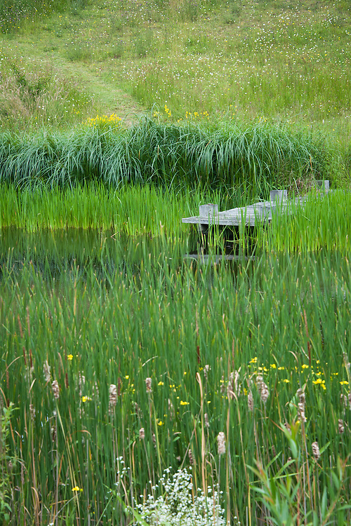 Wooden jetty on Upper Pond, Fairlight End, Pett, East Sussex, late June.