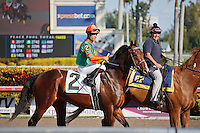 Unbridled Minister with jockey Manoel Cruz up on post parade at Gulfstream Park, Hallandale Beach Florida.