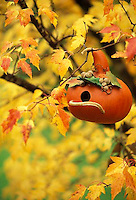 Hand made gourd birdhouse hangs among yellow maple leaves in fall
