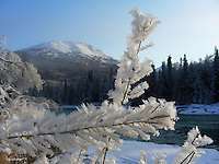 Hoar frost and winter abound on the upper Kenai River.