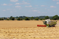 Harvesting Winter barley in South Lincolnshire<br /> &copy;Tim Scrivener Photographer 07850 303986<br />      ....Covering Agriculture In The UK....