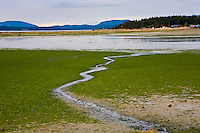 Tide flats of inner Fisherman's Bay, Lopez Island, in the San Juan Island's group of Washington State.  These salt marshes are a wildlife sanctuary and birding area.