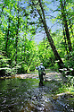 00416-030.01 Fishing:  An angler is fly fishing a stream under a heavy canopy of trees.  Trout, fly angler, cast, fast water, riffle, eddy.