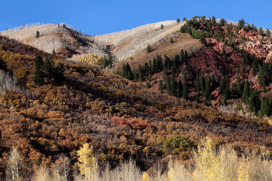 Autumn brings an incredible array of colors to the slopes of the Maroon Bells-Snowmass Wilderness area, Colorado.