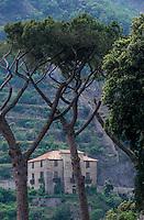 Europe/Italie/Côte Amalfitaine/Cetara : Détail d'une ferme et plantations de citronniers