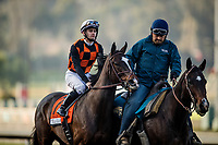 ARCADIA, CA - DECEMBER 26: Paradise Woods #7 with Flavien Prat up walks to the track before the La Brea Stakes at Santa Anita Park on December 26, 2017 in Arcadia, California. (Photo by Alex Evers/Eclipse Sportswire/Getty Images)