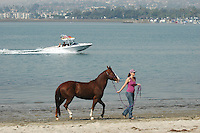 A woman walks her horse on the shores of Fiesta Island, Mission Bay San Diego where hundreds of people were sheltering with their animals.  Wildfires driven by Santa Ana winds forced evacuations from many parts of the county, Tuesday, October 23 2007.