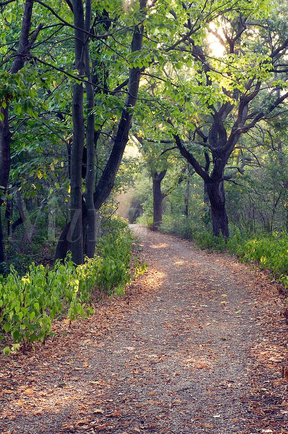 Trail, Loess Hills, Waubonsie State Park, Fremont County, Iowa