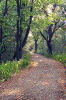 Trail, Loess Hills, Waubonsie State Park, Fremont County, Iowa