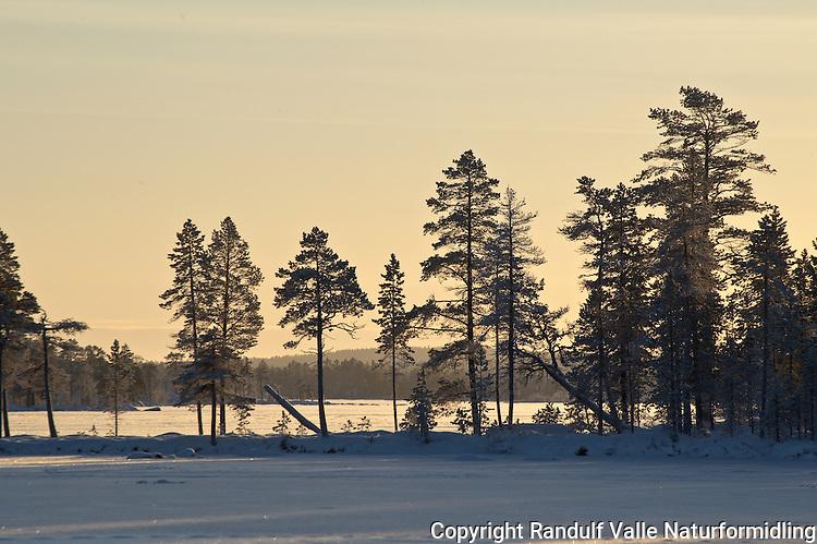 Vinterdag på Ellenvatnet i Pasvik. ---- Winter in Pasvik, Norway.