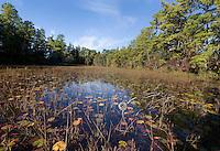 Pine Barrens Pond; NJ, Pine Barrens
