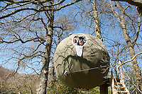"BNPS.co.uk (01202 558833).Pic: Peter Willows/BNPS..This futuristic orb might look like a UFO as it hovers high above the ground but it is actually the country's first 'tree tent'...Suspended three metres high above the forest floor from a series of ropes attached to the woodland canopy, the state-of-the-art pod is the latest in glamping...The revolutionary design, which sleeps two adults, boasts a luxurious double bed that folds up to create a bench seat, LED lighting and even space for a woodburning stove...A wooden walkway leads campers up to the oval front door of the quirky tent, which is suspended in mid-air by eight spider-like ropes attached to surrounding trees...The frame is made from British ash wood sourced from local forests and recycled aluminium, with a cover made entirely from waterproof cotton...The three metre tree tent is the latest addition at The Secret Campsite at Town Littleworth, East Sussex...Campsite owner Tim Bullen, 45, said: ""Our campsite is all about getting closer to nature and our tree tent is great way of doing that.."