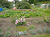 Allotment Plot 58<br />
