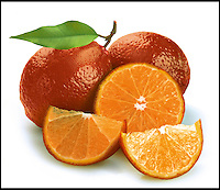 BNPS.co.uk (01202 558833)<br /> Pic: Suttons/BNPS<br /> <br /> Briton's taste for new and exotic foods has led to the introduction of a red lime to the UK.<br /> <br /> The bright crop is the same size and shape as the usual green variety but is an unusually stunning shade.<br /> <br /> It tastes like a sour lime combined with the bite of an orange and is ideal for mixing into marmalades, being served with Tequilia, or garnishing drinks.<br /> <br /> The fruit, dubbed the Red Lime, is native to India and is thought to have been made by crossing a lemon with a mandarin plant.<br /> <br /> It is known by a variety of names across the world including a rangpur, lemandarin, canton lemon, sylhet lime, and limao cravo.<br /> <br /> The trees are now being sold in the UK for the first time and can be grown in the ground or in a large container.