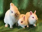 130 rabbit mouse kittens