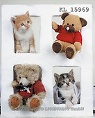 Interlitho, Alberto, CUTE ANIMALS, teddies, photos, 2 teddies, 2 cats(KL15969,#AC#)