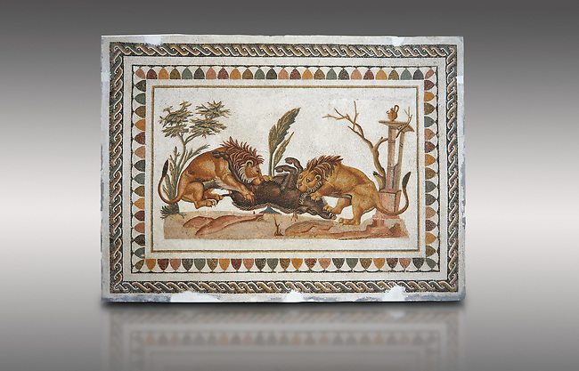 Picture of a Roman mosaics design depicting Lions eating a boar, from the ancient Roman city of Thysdrus. 2nd century AD, House of the Dionysus Proccession. El Djem Archaeological Museum, El Djem, Tunisia.