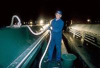 """- pusher of """"Fluviopadana"""" company in night maneuver on the Po river....- spintore della compagnia """"Fluviopadana"""" in manovra notturna sul fiume Po"""