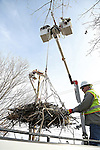 2017_02_22 JCP&L Osprey Nest Move
