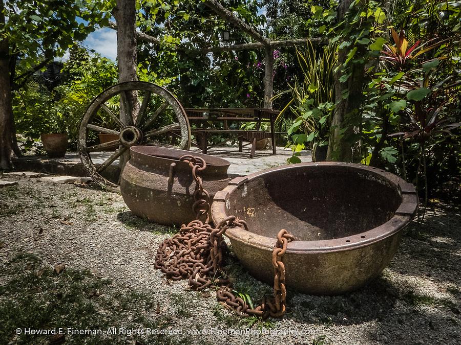 Il Divino's botanical garden
