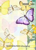 Randy, STILL LIFE STILLLEBEN, NATURALEZA MORTA, paintings+++++Butterflies-Friendship,USRW19,#i#
