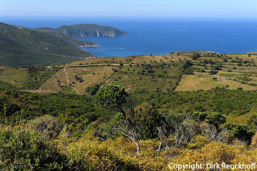 Macchia nahe Capu Rossu an der Bucht von Porto Porto, Korsika, Frankreich