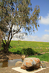 Golan Heights, the spring at Ha'emir (Wasat) junction