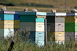 BEE HIVES. BEE KEEPING AND HONEY PRODUCTION Beehives in a field
