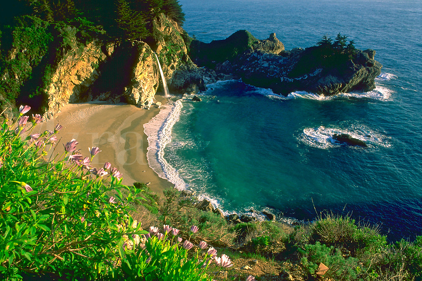 Aerial view of a small, rocky cove and beach with blue water in Julia Pfeiffer Burns State Park in Big Sur, California with purple flowers in the foreground .