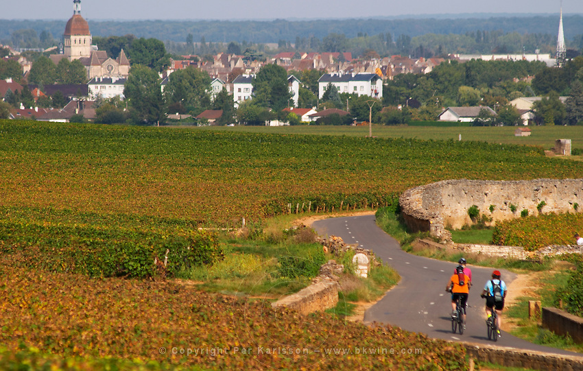Winding road through the vineyard with Beaune village. Bikers. Pommard, Cote de Beaune, d'Or, Burgundy, France