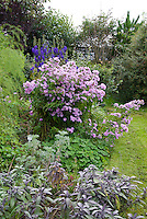 Joy Larkcom's garden, Ireland in September with vegetables, herbs, flowers