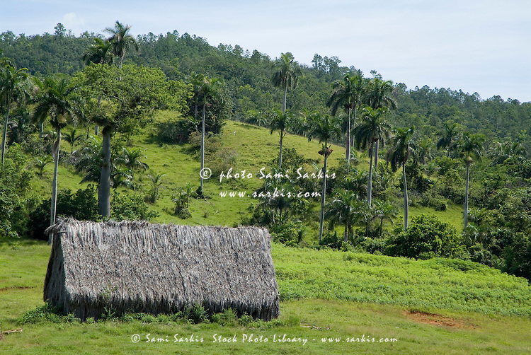 Hut with a traditional thatched roof with coconut trees and the Mogotes in the background, Vinales Valley, Cuba.