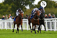Winner of The Bathwick Tyres Conditions Stakes Mr Top Hat ridden by Jim Crowley and trained byDavid Evans during Afternoon Racing at Salisbury Racecourse on 4th October 2017