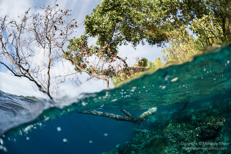 Russell Islands, Solomon Islands; a tree branch is seen both above and below the surface on a over-under, split shot near the shore