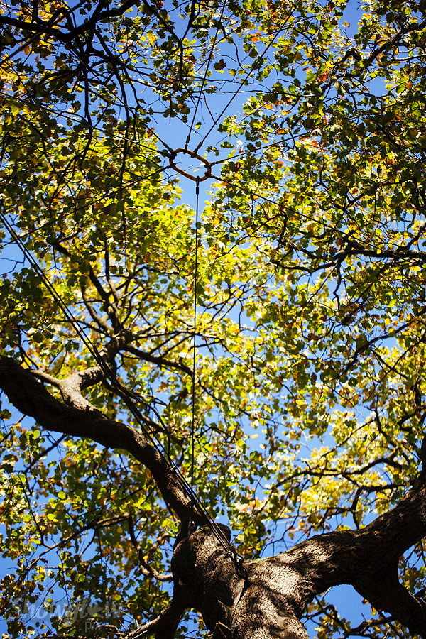 Image Ref: M271<br /> Location: Royal Botanical Gardens, Melbourne<br /> Date: 03.06.17