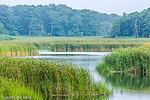 Herring River, Harwich, Cape Cod, MA, USA