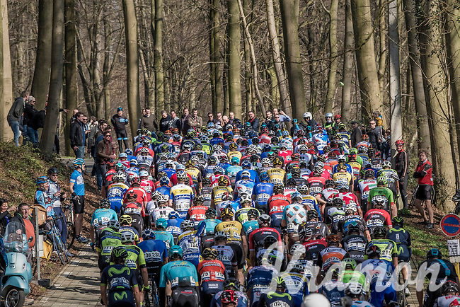 peloton in the forest up La Houppe <br /> <br /> 60th E3 Harelbeke (1.UWT)<br /> 1day race: Harelbeke &rsaquo; Harelbeke - BEL (206km)