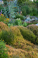 Calluna vulgaris 'Firefly' (gold foliage) among other heathers, grasses, Kniphofia 'Cobra' red-hot poker, sedum stonecrop beside the Dry Stream Bed in Soest Herbaceous Display Garden foliage tapestry, University of Washington Botanic Garden, Center for Urban Horticulture, Seattle