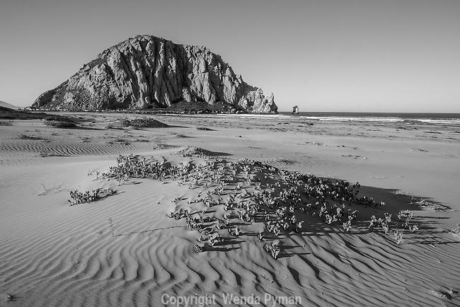 Dawn finds the dunes at Morro Strand State Beach undisturbed.