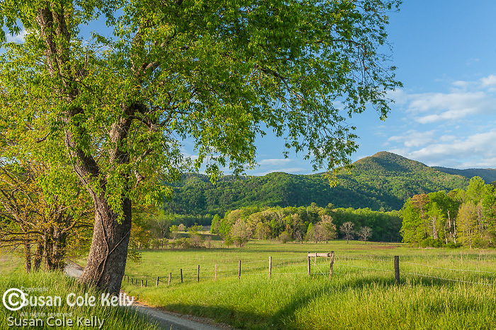 A view of Cades Cove, Great Smoky Mountains National Park, Tennesee, USA