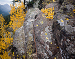 Rock wall and aspens, Mt. Beulah, East Fork Bear River, High Uintas Wilderness