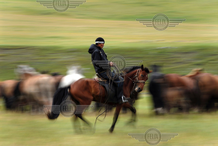 A man herds wild horses in the countryside.