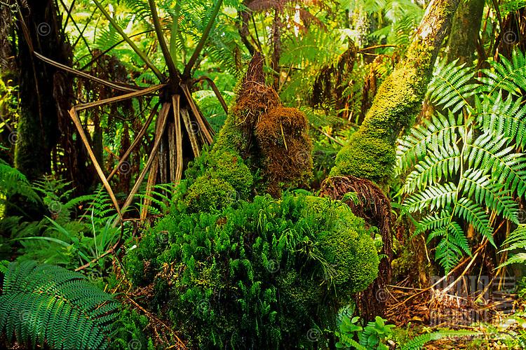 Kamakou Nature Conservancy Preserve