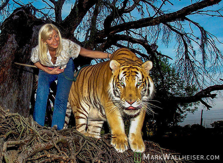 Gloria Johnson and TJ, a 2 year old golden Siberian tiger weighing in at 500 pounds, explore the trunk of an old live oak tree on the Savage Kingdom compound near Bushnell.