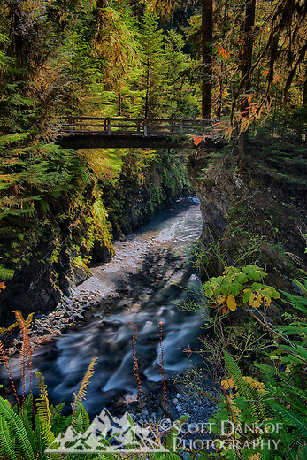 A 2.72 mile trail through old growth forest leads to this picturesque bridge that spans the Quinault River.