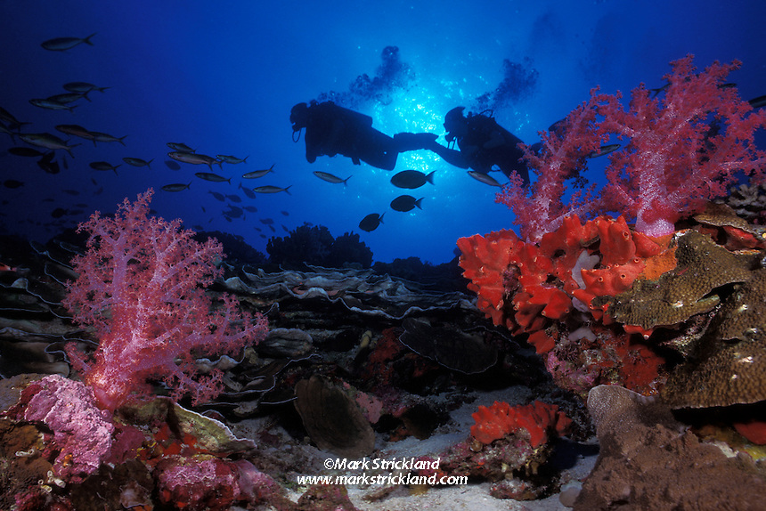 A pair of divers make their way along a sloping reef covered with hard and soft corals and encrusting sponges. Silvertip Bank, Burma Banks, Myanmar, Andaman Sea, Indian Ocean