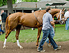before The Go For Wand Stakes at Delaware Park on 6/9/12