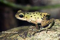 FR24-533z   Strawberry Poison Dart Frog, Dendrobates pumilio