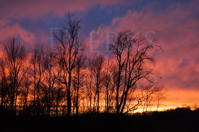 Sunset in very intense and dramatic colors making the sky above a tree line like a large forest fire, saturated red, yellow, and blue, Pennsylvania, PA, USA.