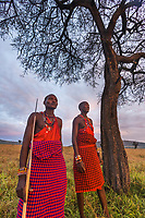 Two Masai warrior tribesman survey the savannah while standing under an umbrella acacia tree in the Masai Mara, Kenya, Africa